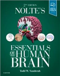 Cover Noltes Essentials of the Human Brain
